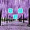 紫藤君De小书童